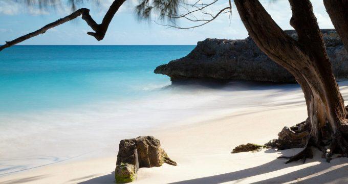 Tropische-oorden-Barbados-01
