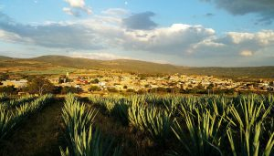 tequila-agave-mexico