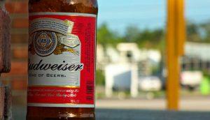 budweiser-populariteit-bier