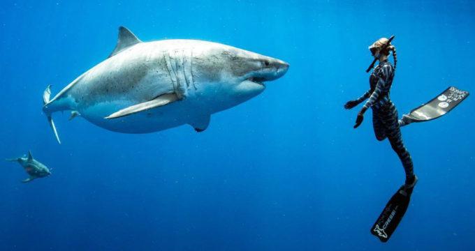 met-haaien-zwemmen