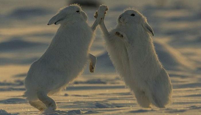 konijnen-hazen-high-five